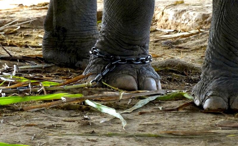 """Conversando con el """"Elefante Encadenado"""" de Bucay"""